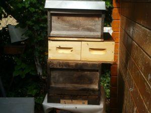 Zander und Dadant gemischt - der Umzug der Honigbienen