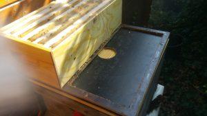 Dadant Honigraum auf Zander-Dadant-Adapter