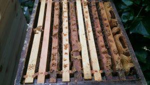 offene Zander Zarge mit Honigbienen