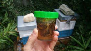 Futterkranzprobe Honigbienen 2019