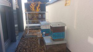 Bienen in MiniPlus auf dem Hochschuldach