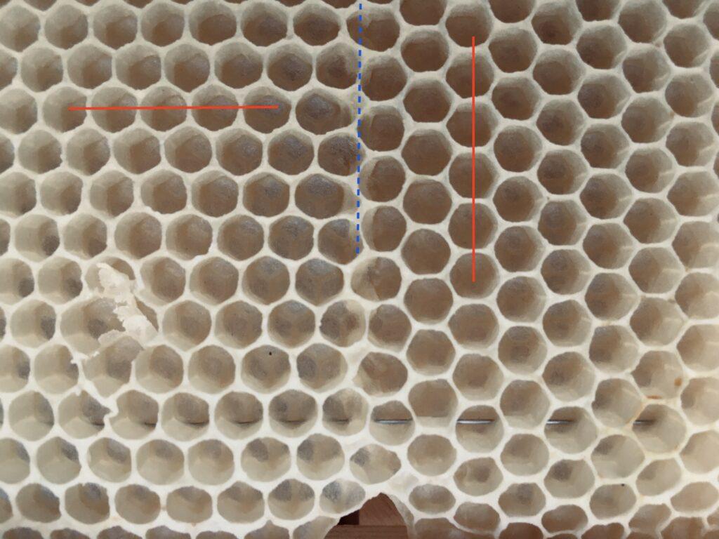 Wabenbau Nahaufnahme 90 Grad gedrehte Mittelwände nebeneinander