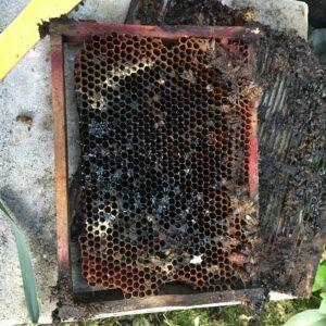 Flutopfer Bienenwabe
