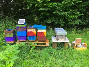 Bienen Beuten mit Adam Fütterer