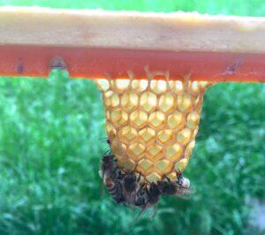 Bienen-bewachster-Anfangskeit-Kunststoff angenommen