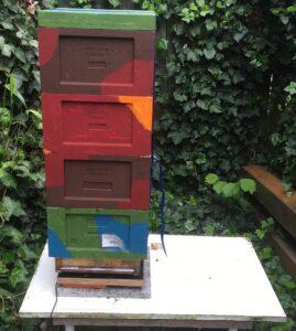 Bienen-Mini-Plus-identisch-aufteilen-1-Spendervolk