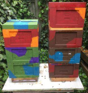 Bienen-Mini-Plus-identisch-aufteilen-2-mit-Bienenfluchtflucht
